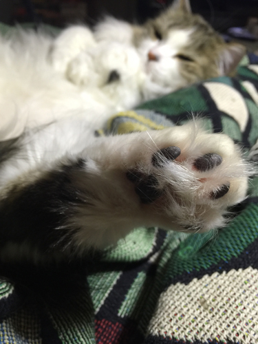 Mischief's paw.