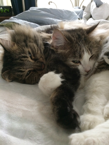 Cuddle Monkeys