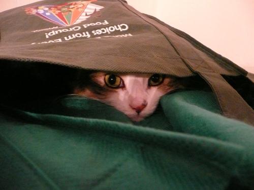 Mischief in ur grocery bag, stalkin' yur groceries