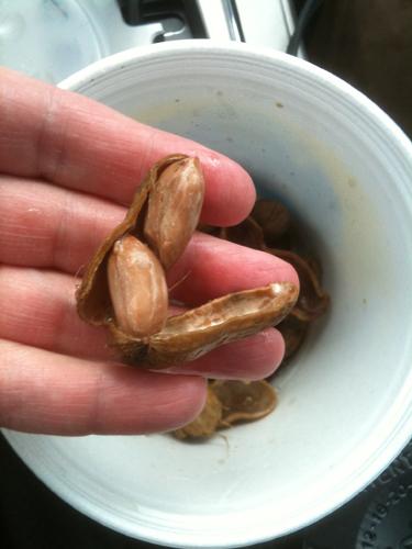 Boiled peanuts taste like home.